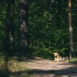 Elle croise une chienne dans la forêt : le vétérinaire fait la découverte la plus monstrueuse de sa carrière