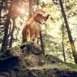 Pour préserver la faune sauvage, arrêtez de lâcher votre chien lors de vos balades en forêt !