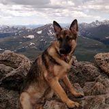 Un chien héros meurt foudroyé en sauvant la vie de son maître