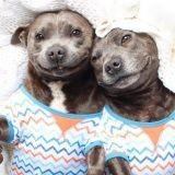 Darren et Phillip :  les deux frères qui donnent le sourire à la toile !