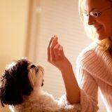 5 friandises pour récompenser votre chien