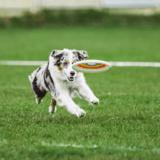 « Il a gardé son regard glacial », une chienne veut jouer au frisbee et trouve un copain peu loquace
