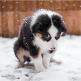 En Pennsylvanie, laisser son chien dehors par grand froid est passible d'une peine de prison