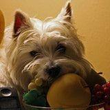 Le top 10 des aliments de l'été pour votre chien