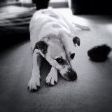 La frustration chez le chien : lui apprendre à l'accepter