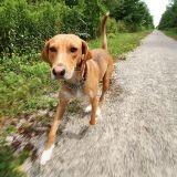 Mon chien fugue : comment l'en empêcher ?