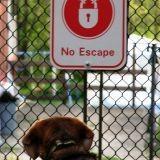 Anti fugue : 10 conseils pour garder votre chien à la maison
