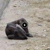 L'incroyable métamorphose d'un chien errant souffrant de la gale (Vidéo du jour)