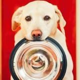 4 règles d'or pour une alimentation parfaitement adaptée aux besoins des chiens