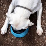 Quelle est la meilleure alimentation humide sans céréales pour chien en 2021 ?
