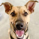 Covid-19 : Le Groupe Mars donne un million de dollars pour les animaux abandonnés et aide les soignants