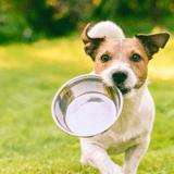 Quelles sont les meilleures gamelles pour chien en 2021 ?