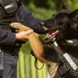 Le chien aboie pour attirer l'attention près de feuillages : le gendarme arrive et tout s'accélère