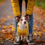 Comment protéger son chien pendant les promenades en période de chasse ?