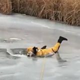 Ce pompier a tout risqué pour sauver un chien prisonnier d'un lac gelé (Vidéo)