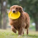Bouleversée par la mort de son chien à cause d'un simple jouet, elle veut prévenir le monde entier