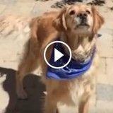 Regardez bien ce chien, il ne rattrape JAMAIS rien ! (Vidéo du jour)