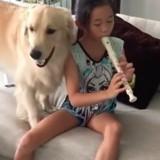 Ce chien chante pendant que sa petite humaine joue de la flute (Vidéo du jour)