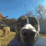 Ce chien vole une caméra GoPro, la vidéo fait le tour du monde