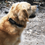 Restez toujours connecté à votre animal grâce au tracker GPS Zen !