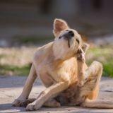 Séborrhée chez le chien : comment traiter les symptômes de cette maladie de la peau ?
