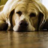 Mon chien est trop gros : que faire ?