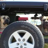 Un chien pollue autant qu'une voiture ?