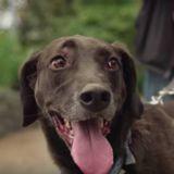 Son chien s'approche et est bizarre, quand elle comprend elle a les larmes aux yeux (Vidéo)