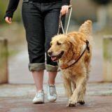 Les Ecoles de chiens Guides d'Aveugles vous ouvrent leurs portes