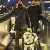 Ce chien-guide filme le quotidien de son maître aveugle, le résultat est stupéfiant