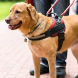 Le chauffeur de taxi refuse de prendre un aveugle et son chien et les insulte violemment