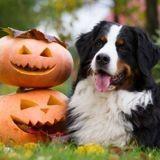 3 idées pour fêter Halloween avec votre chien !