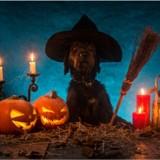 Halloween 2018 : des citrouilles qui ont du chien