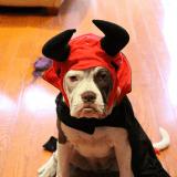 7 raisons pour lesquelles les chiens détestent Halloween