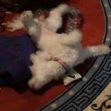 Quand un chien prend de l'herbe à chat (Vidéo du jour)