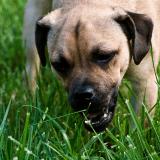 comment arreter diarrhee chien