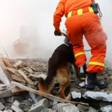 Un chien héros du 11 septembre cloné