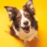 Votre chien est-il heureux ?