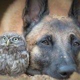 Quand un grand chien et un tout petit hibou s'aiment plus que tout