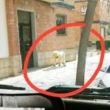 Un homme se déguise en chien pour sortir dans la rue pendant le confinement : la blague se termine très mal