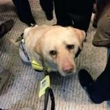 Train en heure de pointe : les passagers laissent un non-voyant en larmes en train d'essayer de protéger son chien