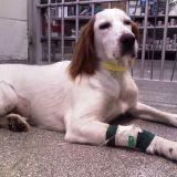 Des cliniques de luxe pour chiens et chats