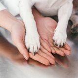 Journée de la recherche canine : le 1er octobre, découvrez des projets de recherche dédiés au chien !