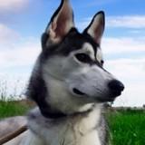 Son chien est mort à cause d'un chewing gum, elle alerte tout le monde au sujet de ce danger méconnu