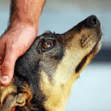 Dog Event : retour sur une conférence passionnante pour mieux comprendre nos animaux