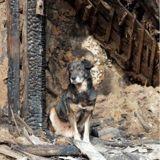 Comment protéger son chien ou chat d'un incendie ?