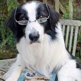 Une application mesure l'intelligence de votre chien !