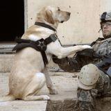 Les chiens militaires souffrent eux aussi de traumatismes