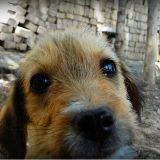 En Iran, bientôt des coups de fouet pour les propriétaires de chiens