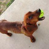 Comment jouer avec son chien ?